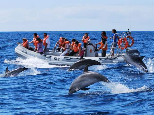 Observación de delfines