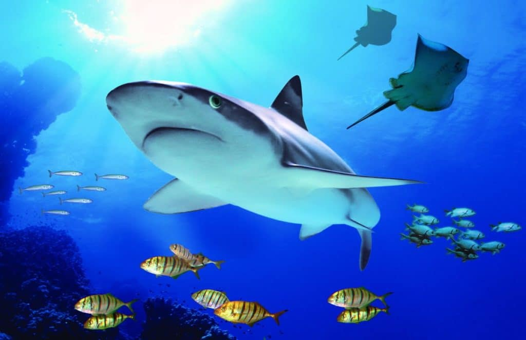 Acuario Sea Life