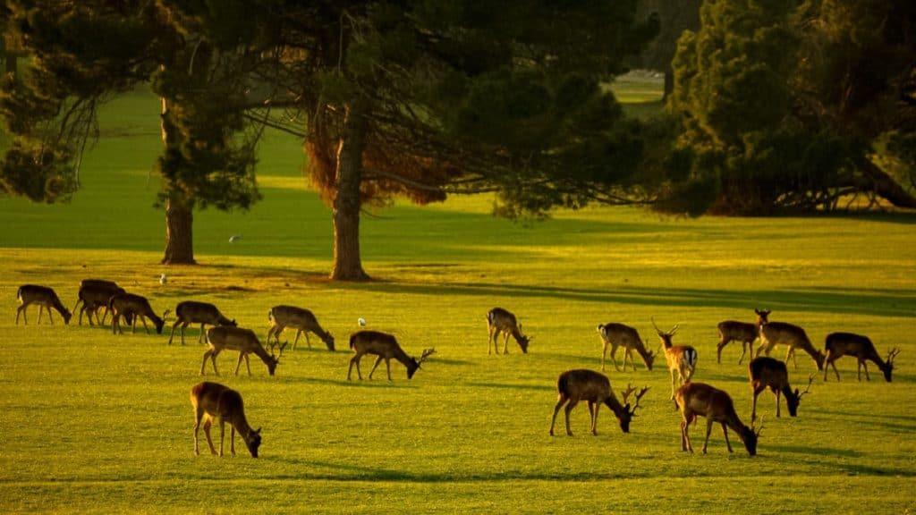 Parque Nacional de Brijuni